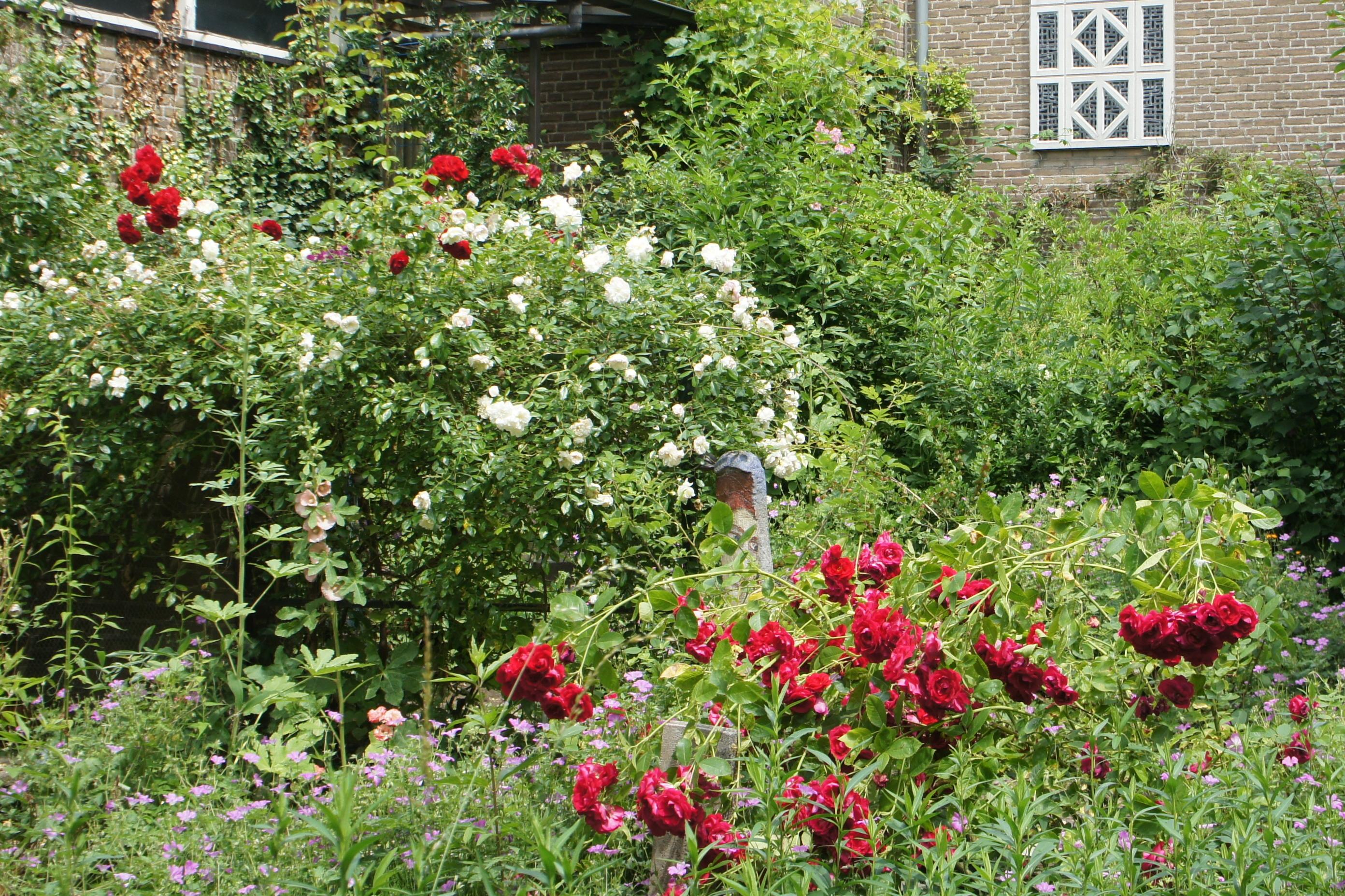 De kloostertuin is ook een rozentuin